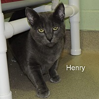 Adopt A Pet :: Henry - Slidell, LA