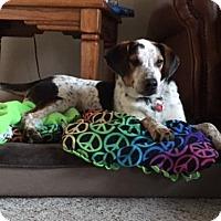 Adopt A Pet :: Kurt - Grafton, WI