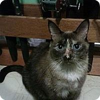 Adopt A Pet :: Roxie - Lantana, FL