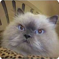 Adopt A Pet :: Jaco - Oakland Park, FL