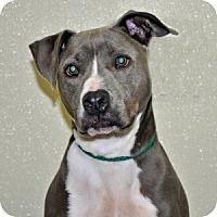 Adopt A Pet :: Cloud - Port Washington, NY