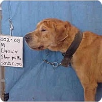 Adopt A Pet :: Chewy/Adopted! - Zanesville, OH