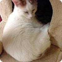 Adopt A Pet :: Mango - Lake Charles, LA