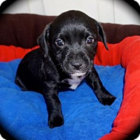 Adopt A Pet :: Blushes, Pinot, and Kisses - La Habra Heights, CA