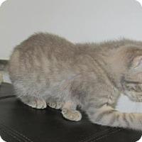 Adopt A Pet :: Lyssa - Norwich, NY