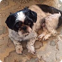Adopt A Pet :: Domino - Rockaway, NJ