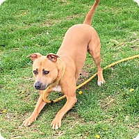 Adopt A Pet :: Peaches - Springfield, IL