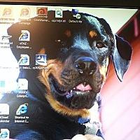 Adopt A Pet :: Merlin - Burbank, CA