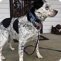 Adopt A Pet :: Marshall - Newport, KY