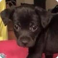 Adopt A Pet :: Wren - Boston, MA