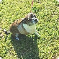 Adopt A Pet :: Little Bit - Rockmart, GA
