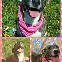 Adopt A Pet :: Lilly - Hopewell, VA