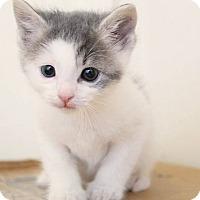 Adopt A Pet :: Sirius - Los Angeles, CA