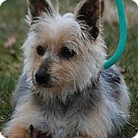 Adopt A Pet :: Joey - Providence, RI