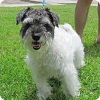Adopt A Pet :: Curly - Kingwood, TX