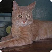Adopt A Pet :: George - Warren, MI