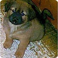 Adopt A Pet :: Stefanie - dewey, AZ