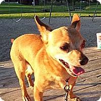 Adopt A Pet :: Junior - Chewelah, WA