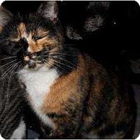 Adopt A Pet :: Fifi - Milwaukee, WI