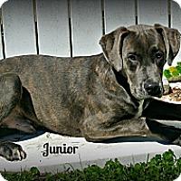 Adopt A Pet :: Junior - Vancleave, MS