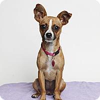 Adopt A Pet :: Emily - Oakland, CA
