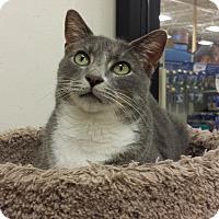 Adopt A Pet :: Joplin - Chesapeake, VA