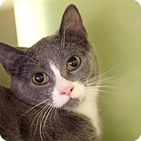 Adopt A Pet :: Alliquippa - Chicago, IL