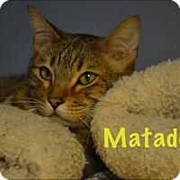 Adopt A Pet :: Matador - Oyster Bay, NY