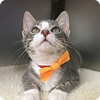 Adopt A Pet :: Popsicle - Secaucus, NJ
