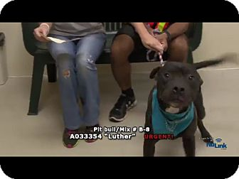 Pit Bull Terrier Mix Dog for adoption in Newnan City, Georgia - Luther