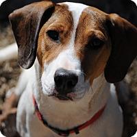 Adopt A Pet :: Lucy - Monroe, NC