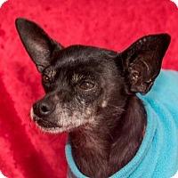 Adopt A Pet :: Sebastian - San Marcos, CA