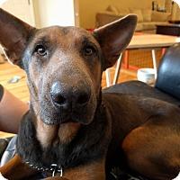 Adopt A Pet :: Psyche  (Foster Care) - Baton Rouge, LA