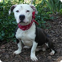 Adopt A Pet :: Vinnie - Mission Viejo, CA