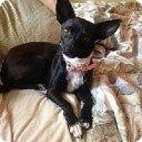 Adopt A Pet :: LEENA - Hampton, VA