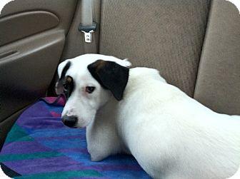 Terrier (Unknown Type, Medium)/Terrier (Unknown Type, Medium) Mix Dog for adoption in Dallas, North Carolina - EMMY