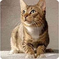 Adopt A Pet :: Huxter - New York, NY