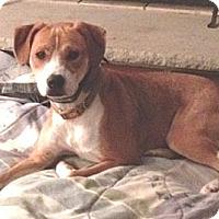 Adopt A Pet :: Chaucer CP - Dayton, OH