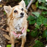 Adopt A Pet :: Jessie - Sherman Oaks, CA