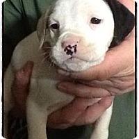 Adopt A Pet :: Josie - Medora, IN