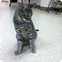 Adopt A Pet :: Beetle - Trevose, PA