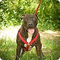 Adopt A Pet :: Ratchet - Fort Valley, GA
