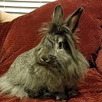 Adopt A Pet :: Pogo - Watauga, TX