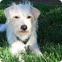Adopt A Pet :: Rhea - Meridian, ID