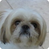 Adopt A Pet :: Chloe!  Special Girl - St Petersburg, FL