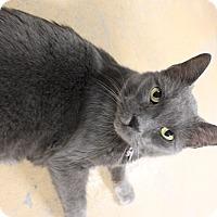 Adopt A Pet :: Rocky - New Richmond,, WI