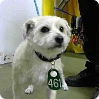 Terrier (Unknown Type, Small) Mix Dog for adoption in San Bernardino, California - URGENT on 4/8 @DEVORE