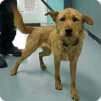 Adopt A Pet :: Genova - Reisterstown, MD