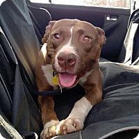 Adopt A Pet :: Margaret - Sharon Center, OH