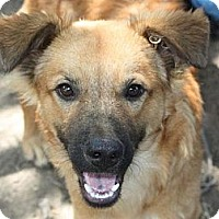 Adopt A Pet :: Boone - kennebunkport, ME